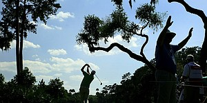 Diseased live oak removed from Sawgrass Stadium