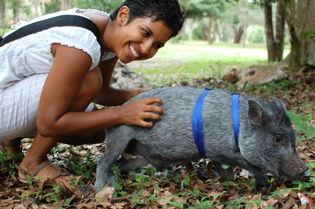 Sophia Eristen, 24, of Orlando brought her potbelly pig, Rhys, to the 11th Annual Independence for Animals Potluck.