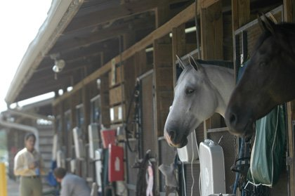 Some of the top competitive horses in the world call Seminole County their home, along with some national-level coaches who are keeping the county's equestrian community thriving during a slow economy.