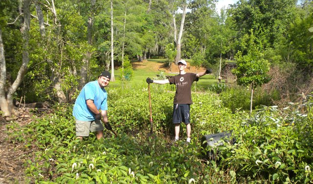 The city of Winter Park, in partnership with Friends of Mead Garden, recently began a restoration project on the Lake Lillian Marsh.