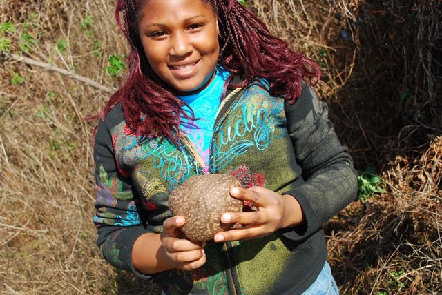 Marquasia Lane shows off a large air potato, harvested from Torcaso Park in Winter Springs. She took part in a program to curb the spread of the invasive plants.