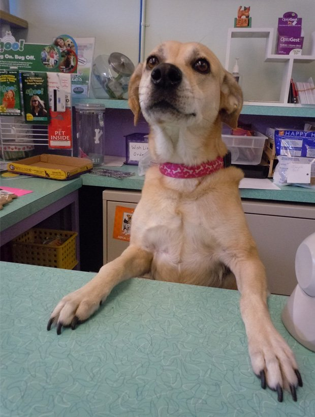 Sara greets customers at Pookie's Pet Nutrition and Bow Wow Bakery when co-owner Marcia Sundberg is away. Sara is a rescue dog now owned by Marcia, who is sponsoring the Winter RescueFest that's happening this weekend at Maitland's Lake Lily Park.