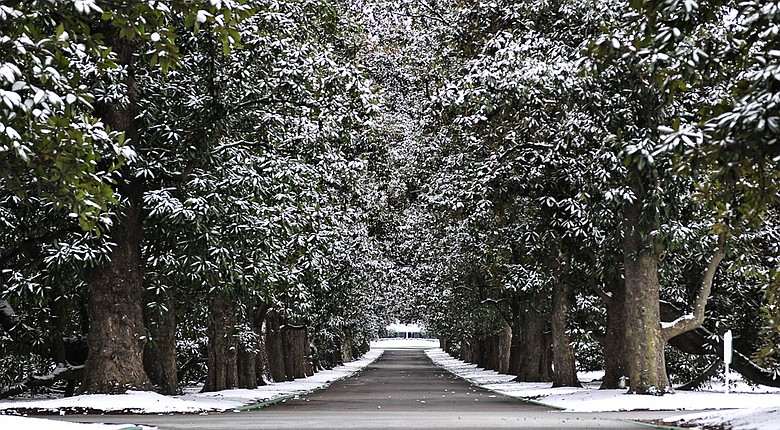 Magnolia Lane is blanketed in snow at the Augusta National Golf Club on Wednesday, Jan. 29, 2014.