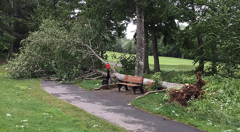 Tropical Storm Arthur knocked down this tree near the eighth tee and several others at Ashburn Golf Club in Halifax, Nova Scotia, forcing the postponement of the third round of the Web.com Tour's 2014 Nova Scotia Open.