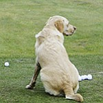 VIDEO: Dogs romp around Sunningdale GC, site of Senior British Open