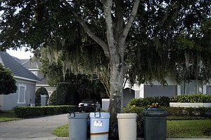 The tree damaged by Tiger Woods in his auto accident is surrounded by plastic garbage cans Nov. 30 in the Isleworth community in Windermere, Fla.