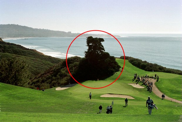 A picture of the par-3 6th hole at Torrey Pines North. Circled is the famous cypress tree that was knocked down in the storm.