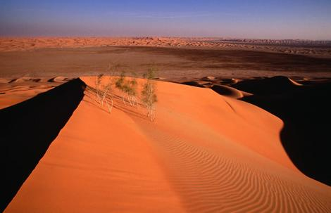 Abu Dhabi's desert