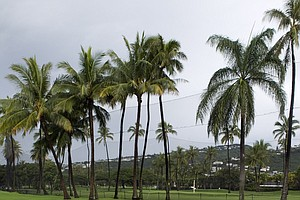 Palm trees are reflected in water on the ninth fairway at Waialae Country Club, Thursday, Jan. 13, 2011, in Honolulu.