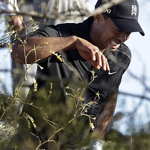 Tiger Woods steps out of the brush after playing a ball on the 19th hole while playing Thomas Bjorn during the first round of the Match Play Championship.