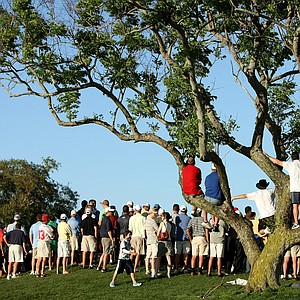 Orlando, FL--03/29/09--Spectators climb a tree at No. 15 to try to catch a glimpse of Tiger Woods during the final round of the Arnold Palmer Invitational at Bay Hill Club and Lodge.