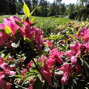 An azalea is seen at the 10th hole during a practice round prior to the 2011 Masters.
