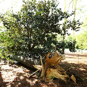 A downed tree is seen near the 11th hole after an overnight storm prior to the 2011 Masters.