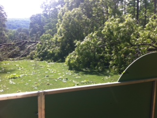 About 20 trees were felled at Shoal Creek
