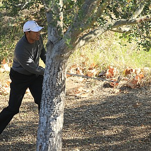 Tiger Woods watches a shot from the trees on the fifth hole during the third round of the Chevron World Challenge.