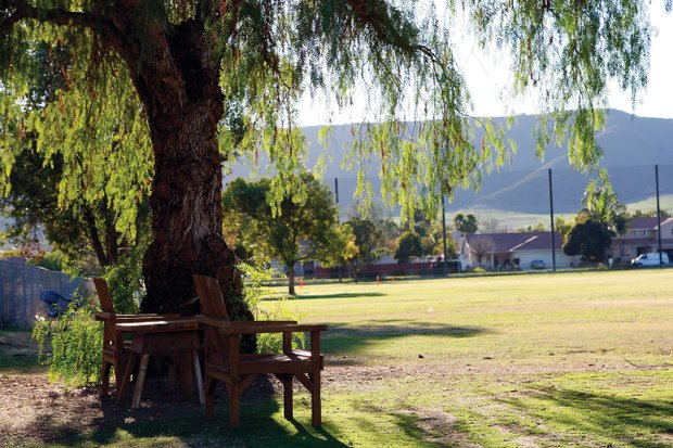 Rickie Fowler took golf lessons under this pepper tree at Murrieta Valley Golf Range while growing up.  Photo by Jody Gomez