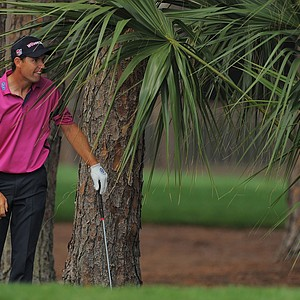 Padraig Harrington watches his ball after hitting from under a plam tree during the first round of the Honda Classic.