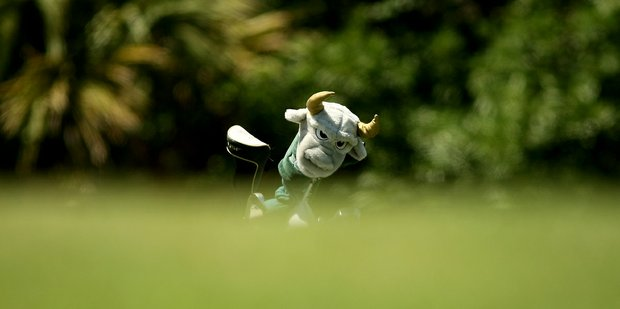 A University of South Florida head cover looms large at the Big East Women's Championship at Reunion Resort. The Bulls have a 5-shot lead heading into the final round.