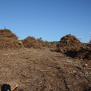 Picture of the clearing of the brush in the area.