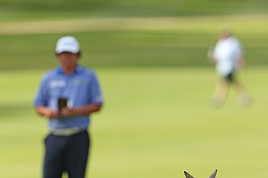 PERTH, AUSTRALIA - OCTOBER 21: A kangaroo is pictured on the 15th fairway as Jason Dufner of the USA waits to take his second shot during round four of the Perth International at Lake Karrinyup Country Club on October 21, 2012 in Perth, Australia.