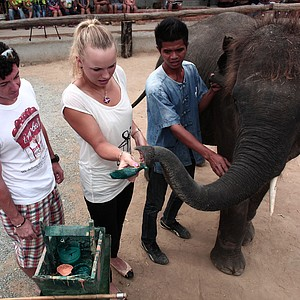 Caroline Wozniacki of Denmark, center, and her boyfriend and golfer Rory McIlroy of North Ireland, left, hands a brush to an elephant to draw the painting before her match against Victoria Azarenka of Belarus at Thailand Tennis Charity Invitation in Hua Hin, southern Thailand Sunday, Jan. 1, 2012.