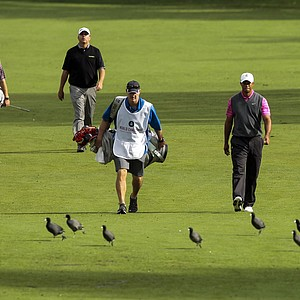 Tiger Woods, right, and Bo Van Pelt walk down the second hole fairway during the second round of the World Challenge golf tournament at Sherwood Country Club in Thousand Oaks, Calif., Friday, Nov. 30, 2012.