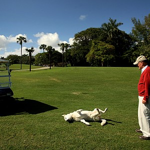 Pete Dye at Gulfstream Golf Club with his dog Sixty.