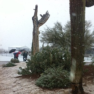 It's really the desert, but a lot of snow has fallen in Tucson, Ariz.