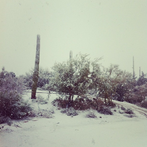A lot of snow fell at Dove Mountain.
