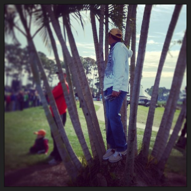 A spectator blends in with a tree trying to watch Tiger during the Honda Classic on Saturday.