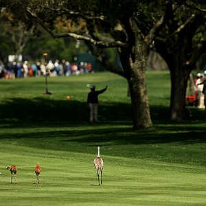 A family of Sandhill cranes make their way down the ninth fairway in Round 1.