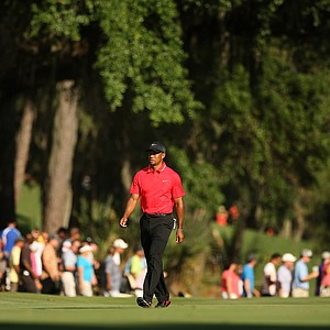 Tiger Woods walks up No. 15 in the final round of the 2013 Players Championship at TPC Sawgrass.