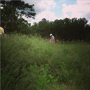 Alabama's Justin Thomas walks through the long stuff to the seventh tee box at the Capital City Club.