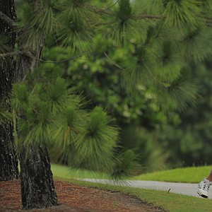 Austen Truslow watches a shot from under the trees during the U.S. Open Section Qualifier at the Ritz-Carlton  Members Golf Club.