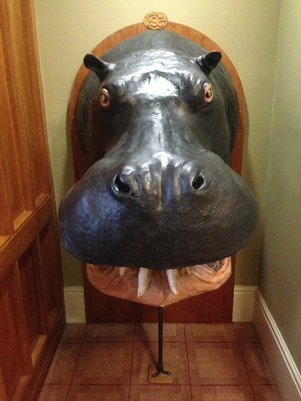 A hippo, a gift from a member who was a big-game hunter, is prominently displayed in the clubhouse at Formby. Interestingly, the Royal Navy had a party at the club in the 70s and when it was all said and done took the Hippo head on the ship with them for a joy ride. The club sent a letter to the Navy and eventually the Hippo was returned.