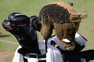 David Lingmerth's Ping equipment is guarded by a warthog.