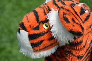 According to his caddie, Joe LaCava, Tiger Woods gets a new driver headcover before the start of every season.