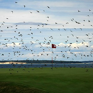 Birds swarm around No. 18 during the 2013 Walker Cup at National Golf Links of America in Southampton, N.Y.