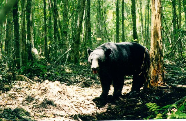 Bear sightings have reached record numbers in Florida this year.