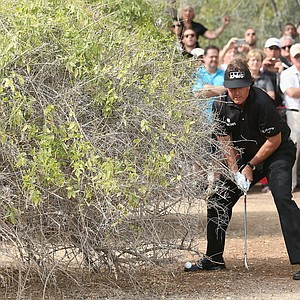 Phil Mickelson plays right-handed from under a bush on the 13th hole, double hitting the ball in the process, during the final round of the Abu Dhabi HSBC Golf Championship.