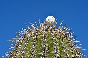 A ball spotted on a cactus' spines during Tuesday practice for the PGA Tour's 2014 WGC-Accenture Match Play at Dove Mountain in Marana, Ariz.