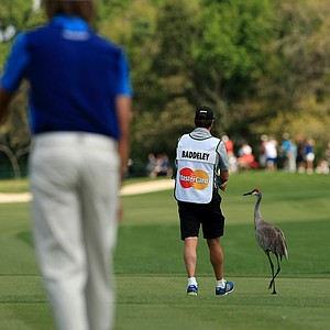 Aaron Baddeley's caddie tries to scare off some sandhill cranes at the first tee in Round 3 of the Arnold Palmer Invitational at Bay Hill Lodge and Club.