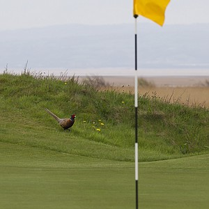 The 14th hole at Royal Liverpool in Hoylake, host of the 2014 British Open.