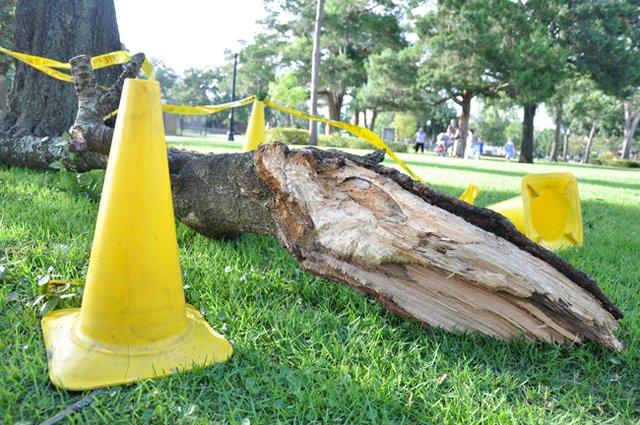 With some trees dropping branches or worse, city officials are grappling with the issue of how to keep up Winter Park's green image in light of revelations that they may not legally be able to replace nearly as many trees as they had previously hoped.