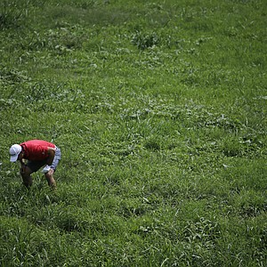 Jason Day looks for his ball in the hazard on the second hole during the third round of the PGA Championship.