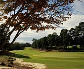 My Year in Golf: Bradley S. Klein