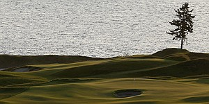 Chambers Bay's lone tree symbolizes U.S. Open venue's resilience