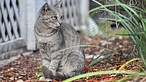 Deltona commissioner offers workshops for Winter Park cat issues
