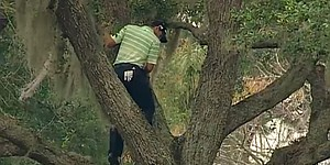 Video: Sergio Garcia hits out of a tree - literally